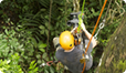 Tracking Sloth in tree, Panama, How Life Works, Mark MacEwen