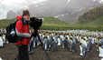 Filming King Penguins on eggs, South Georgia in the Southern Ocean